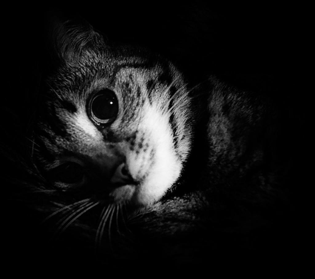 Муромские коты Елены Дробат 09