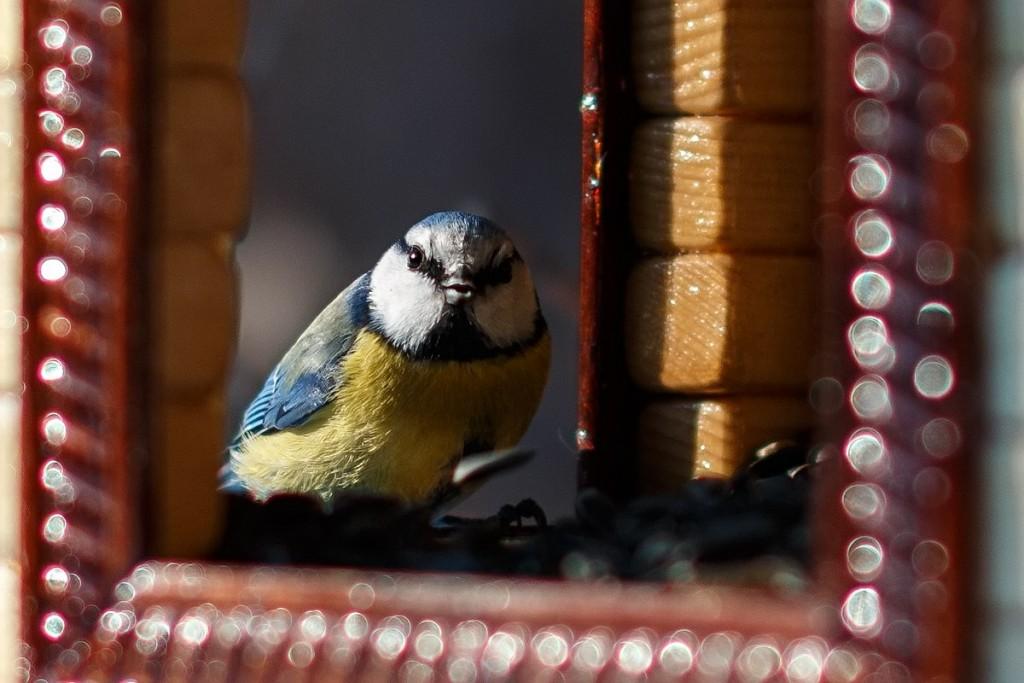 Птицы в Лесном парке Дружба 01