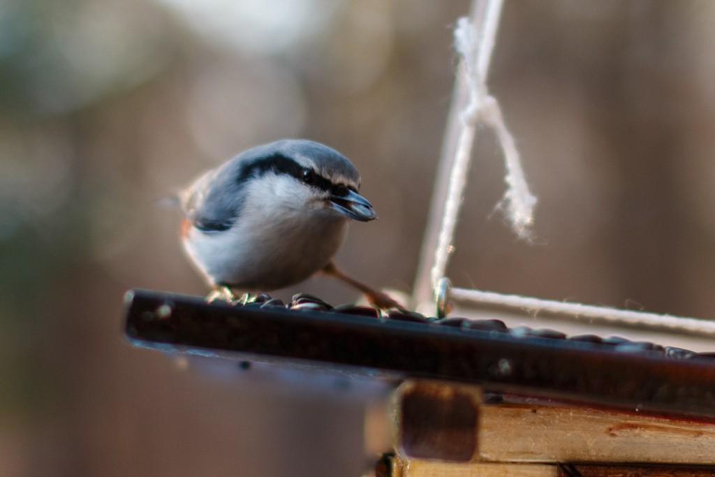 Птицы в Лесном парке Дружба 03