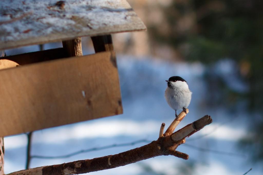 Птицы в Лесном парке Дружба 04