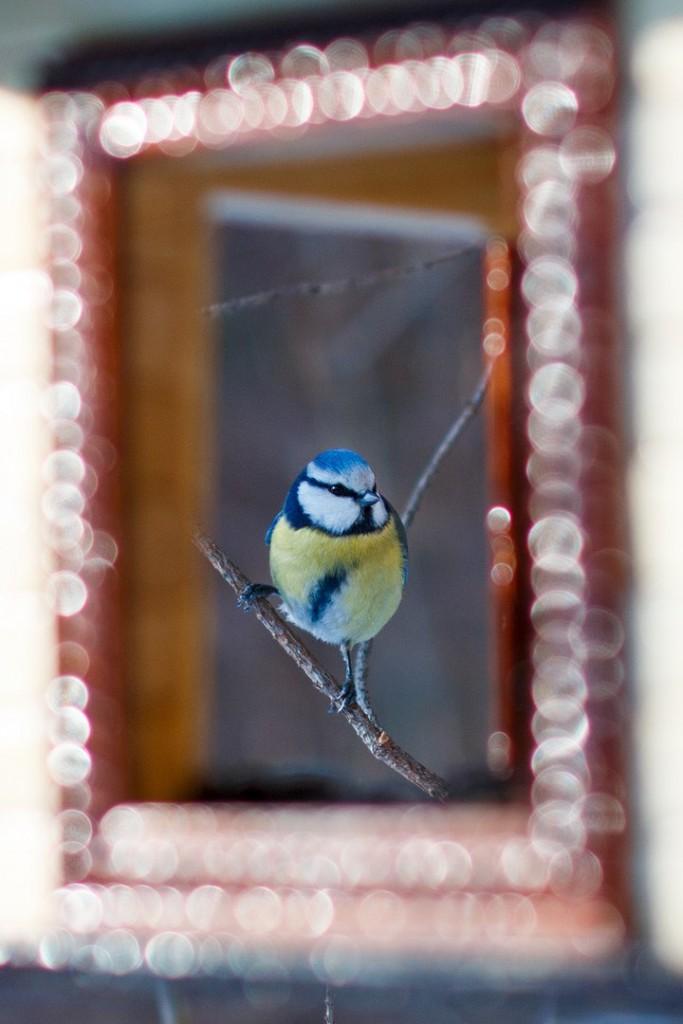 Птицы в Лесном парке Дружба 08