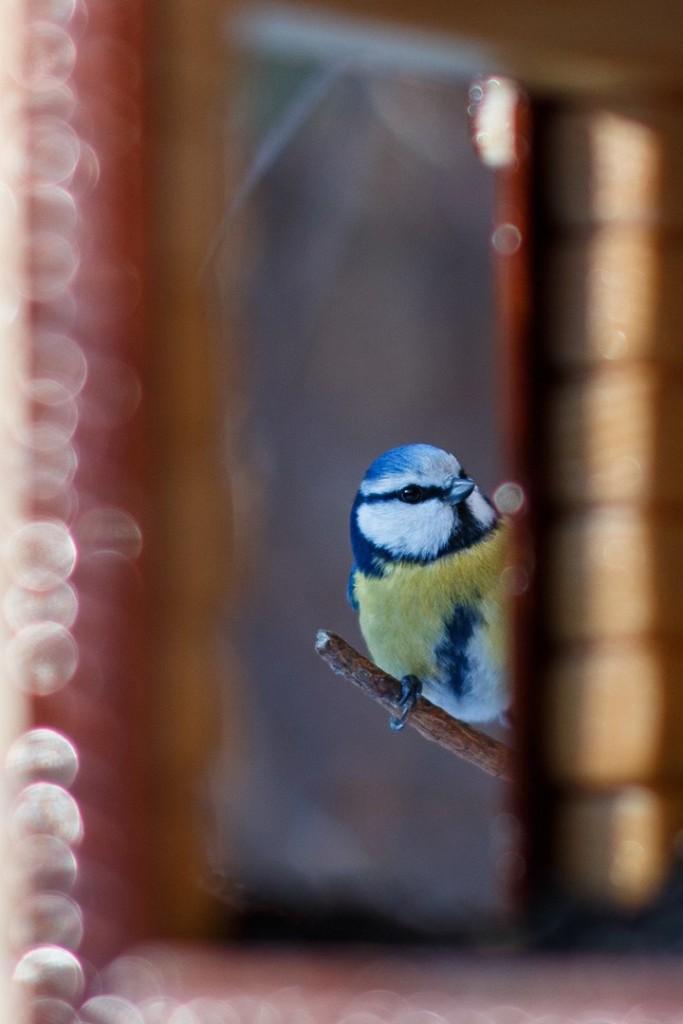 Птицы в Лесном парке Дружба 09