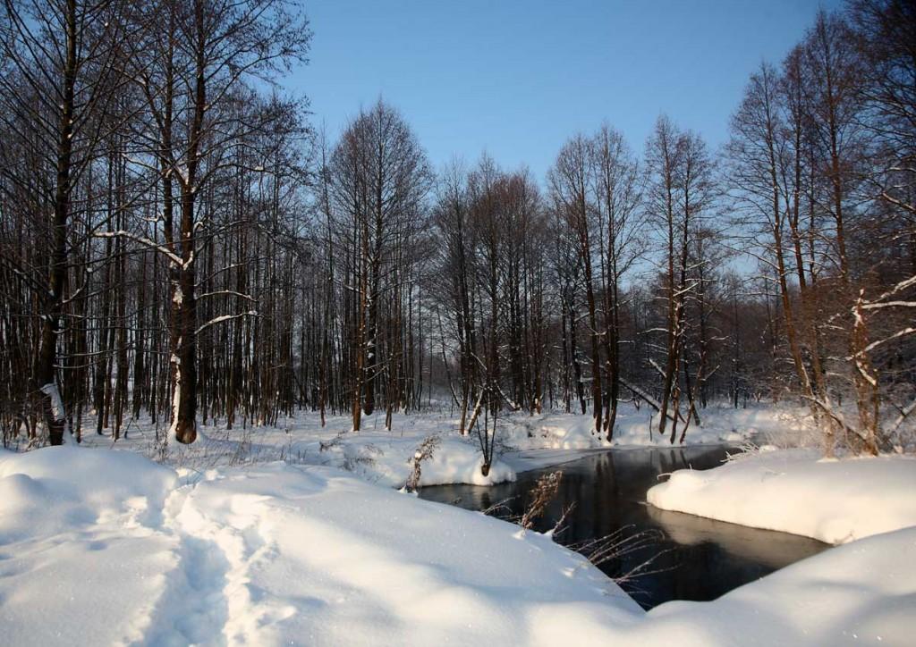 Сегодня на реке Нерехте в Ковровском районе 06