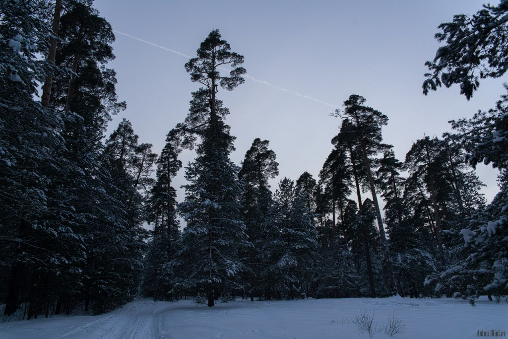 Владимирская область. Вечерний лес 01