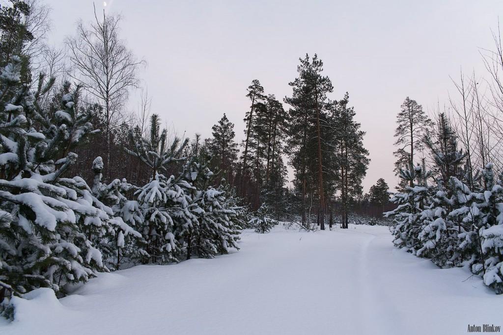 Владимирская область. Вечерний лес 03