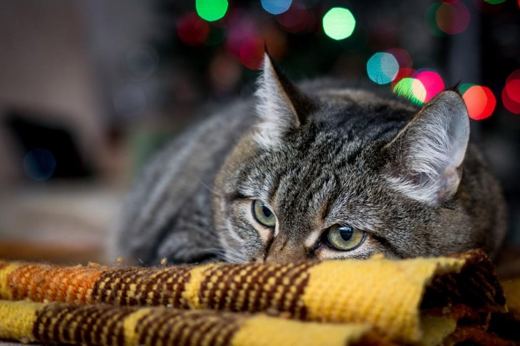 Котик, котик мягенький животик