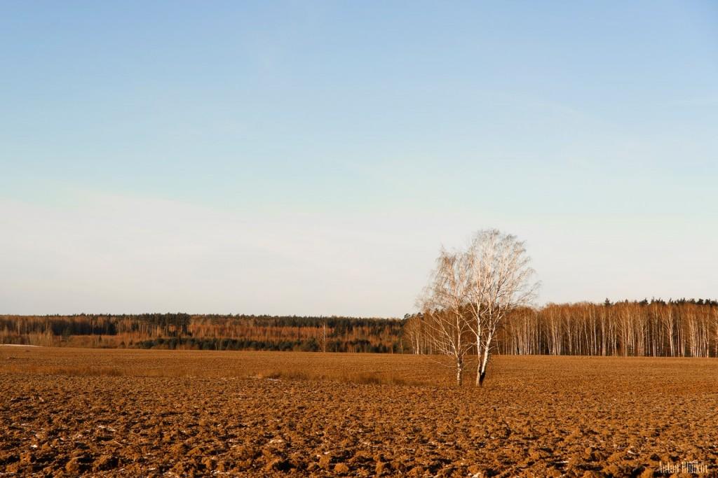 Красота русского поля