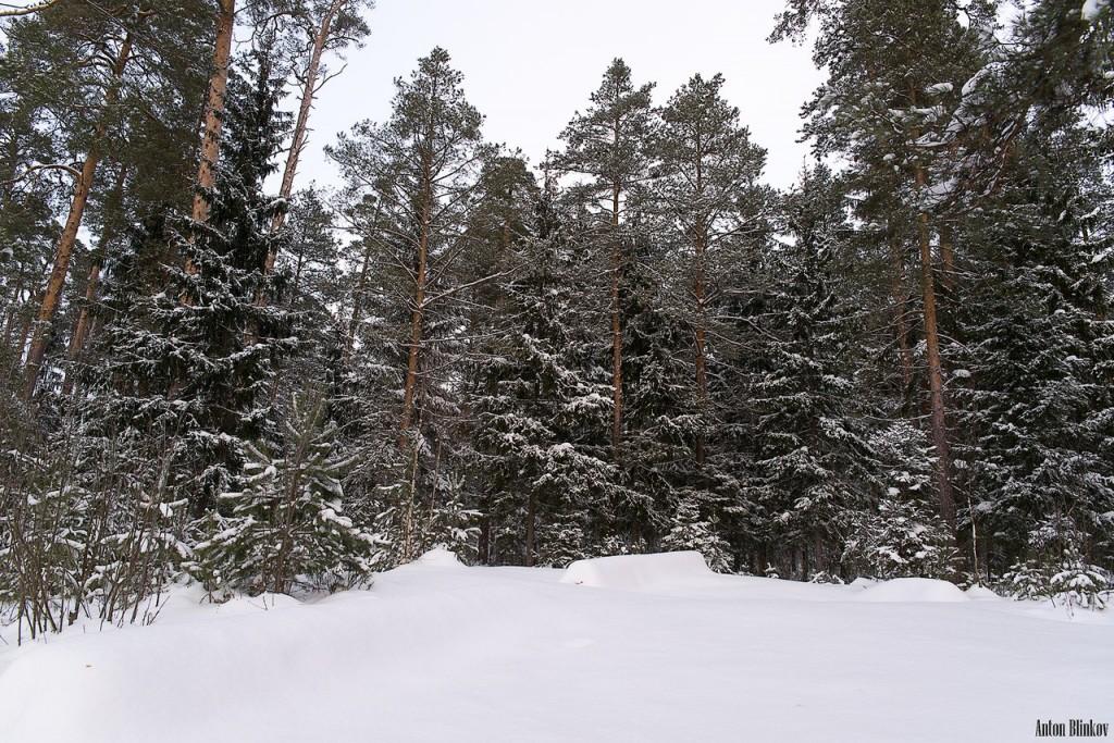 Лес под снежным покровом 01