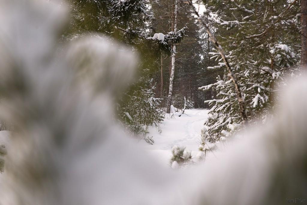 Лес под снежным покровом 02