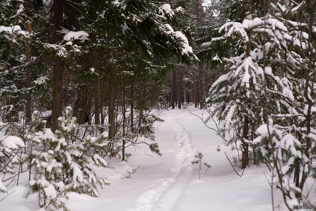 Лес под снежным покровом 04