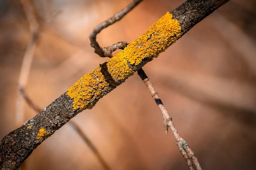 Март во Владимирском лесу 04