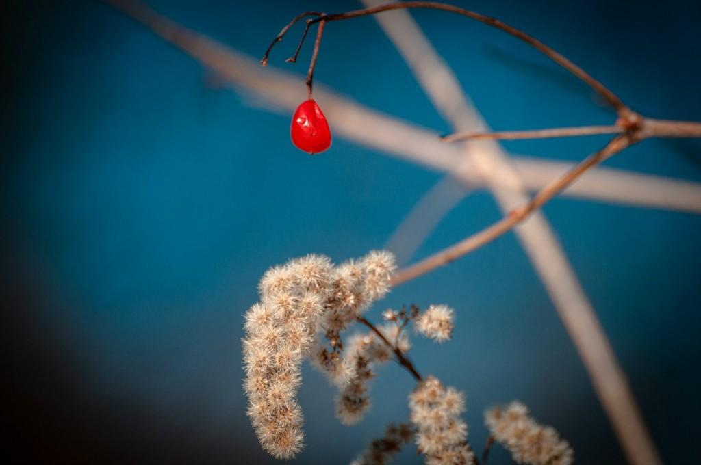 Март во Владимирском лесу 05