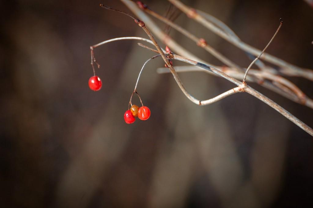 Март во Владимирском лесу 06