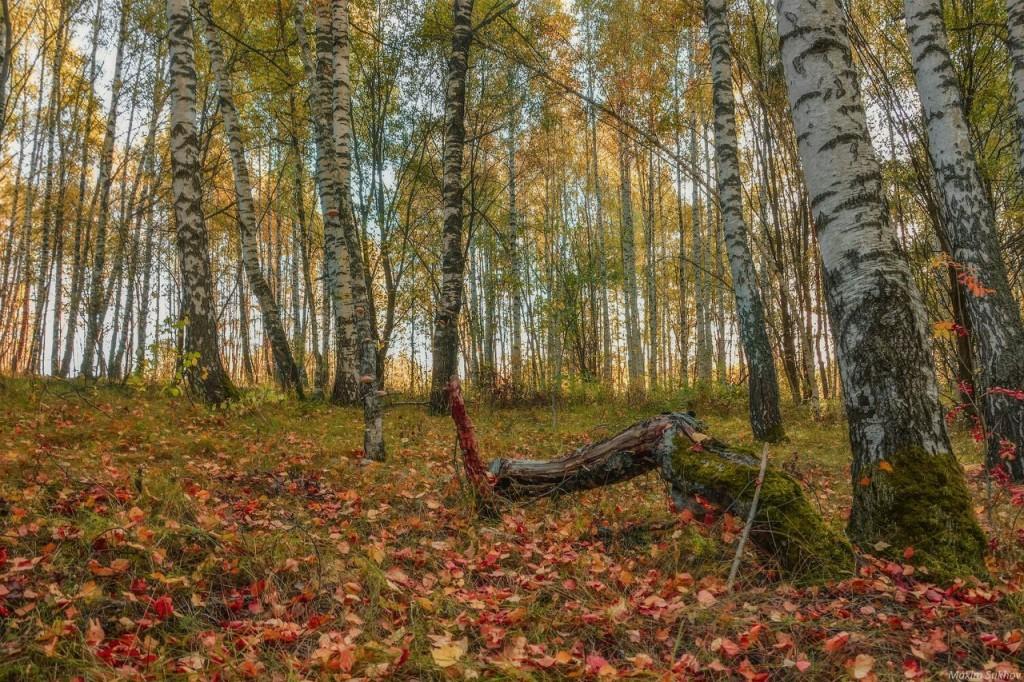Мстерский лесок, Вязниковский район