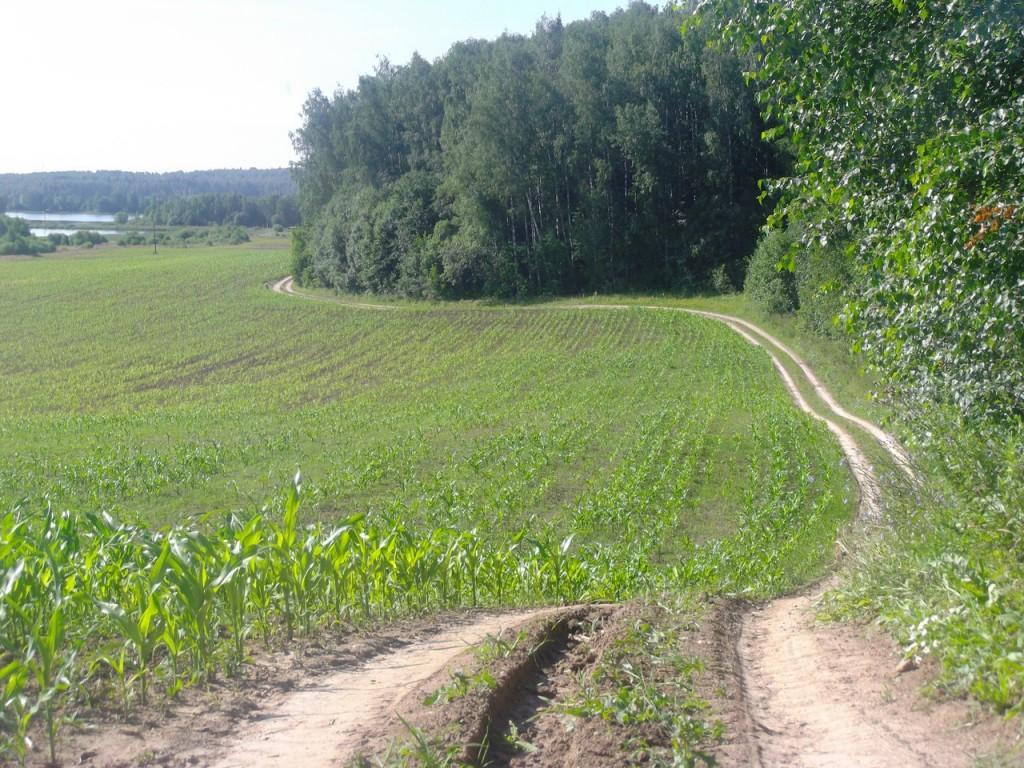 Окрестности бывшего рыбхоза поселка Ворша, Собинский район 013