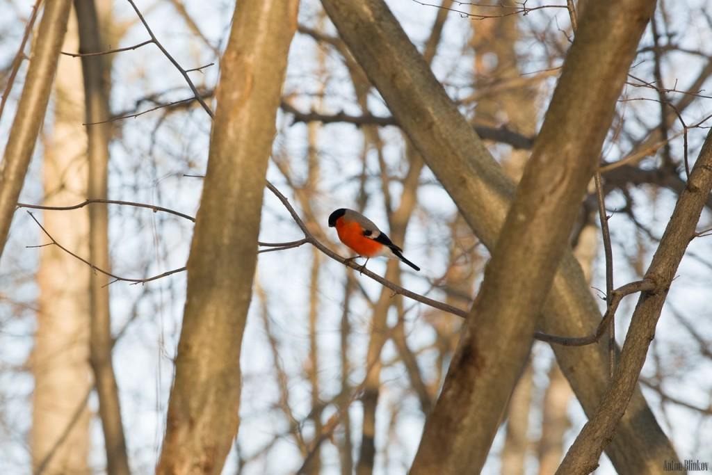 Птицы в парке Дружба 01