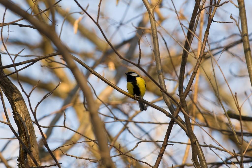 Птицы в парке Дружба 02