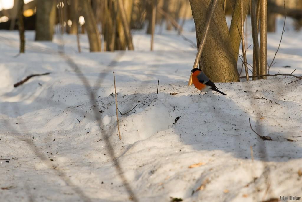 Птицы в парке Дружба 03