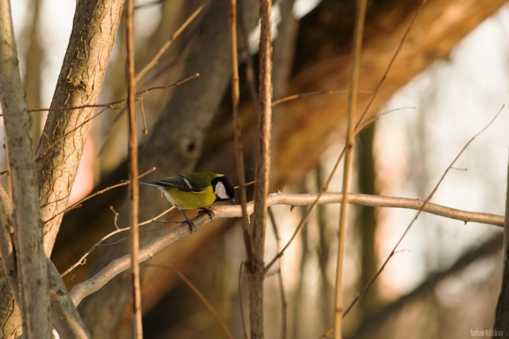 Птицы в парке Дружба 04