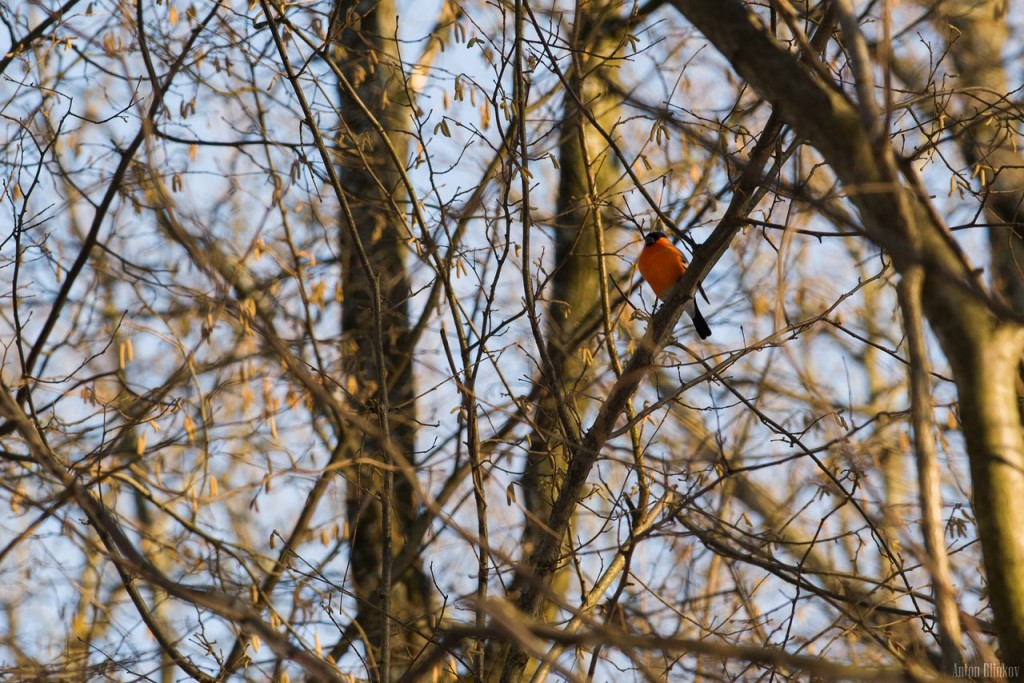 Птицы в парке Дружба 05
