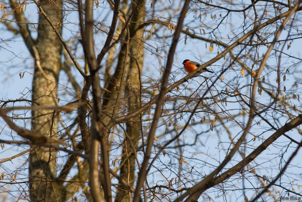 Птицы в парке Дружба 06
