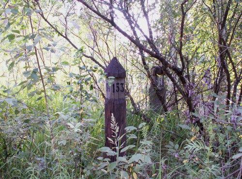 Столбы-указатели в лесу (Квартальные столбы)