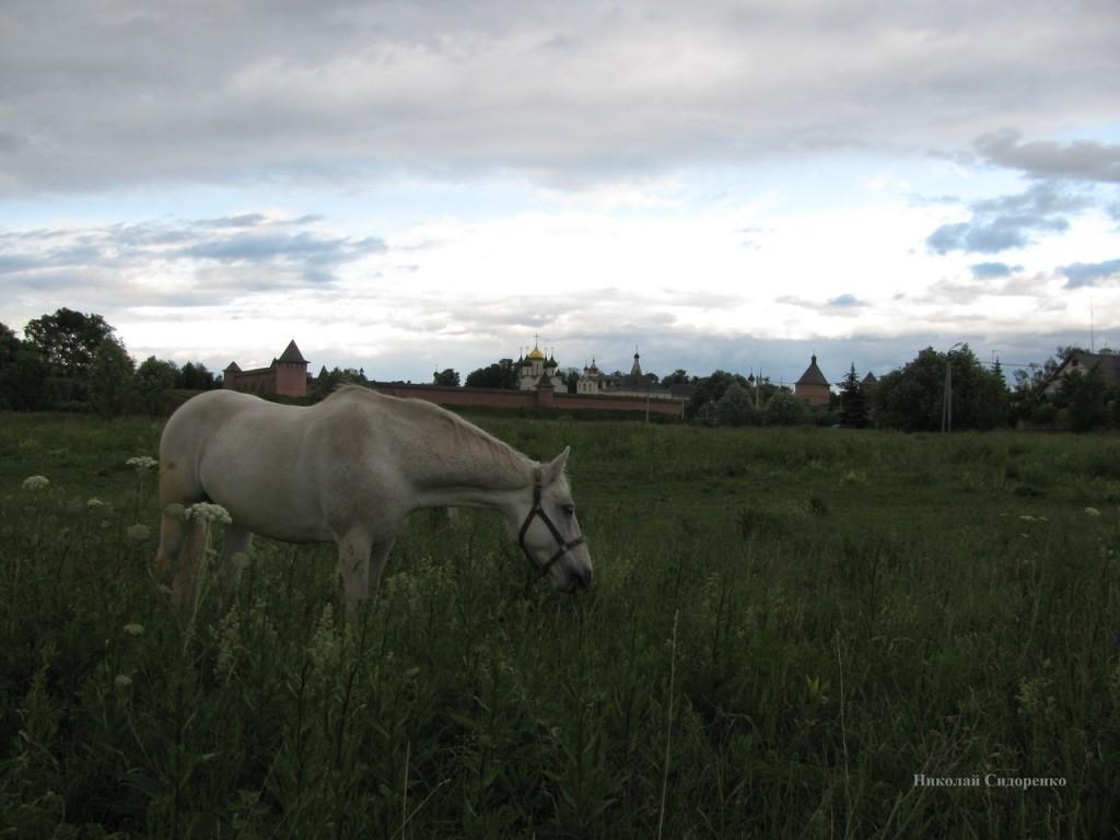 Суздальская лошадка