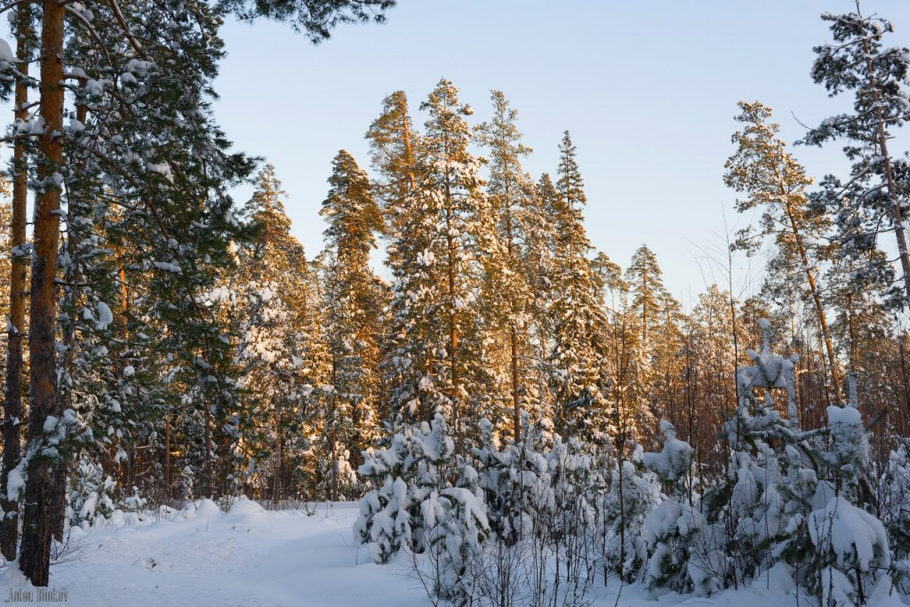Февральское утро во Владимирском лесу 01