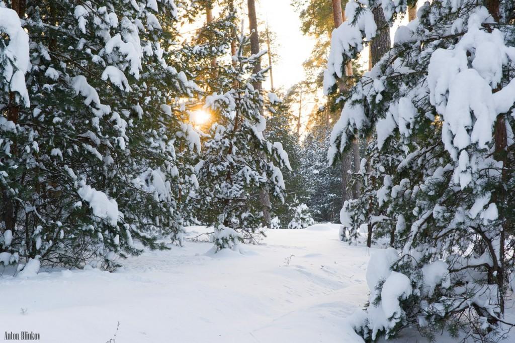 Февральское утро во Владимирском лесу 02
