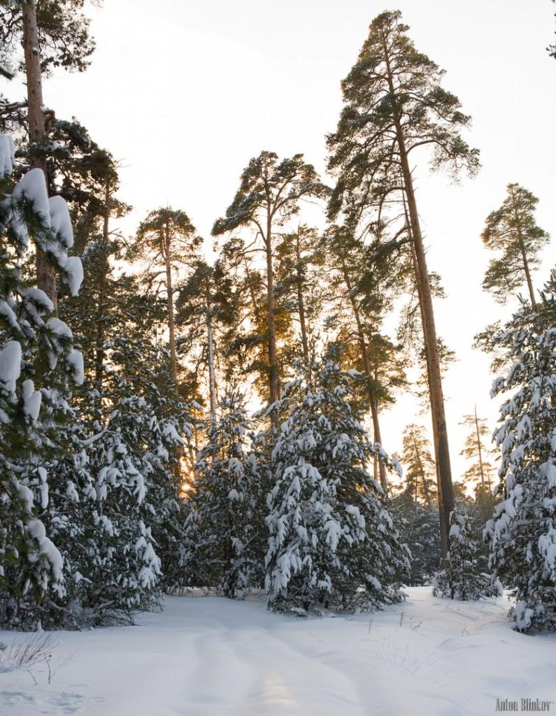Февральское утро во Владимирском лесу 03