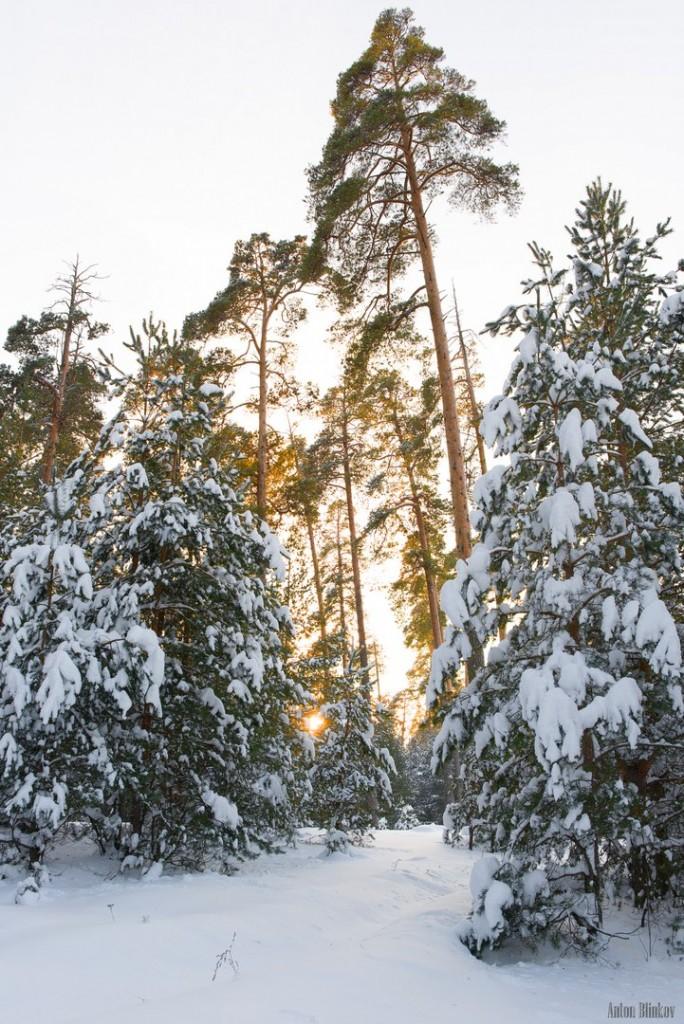 Февральское утро во Владимирском лесу 04