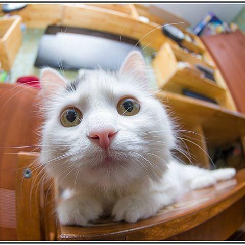 1 марта - день кота!