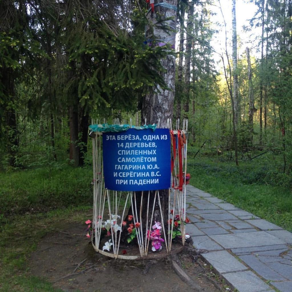 Береза на месте гибели @ Памятник Гагарину и Серёгину