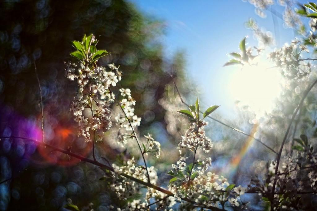 Весна во Владимирских парках 02
