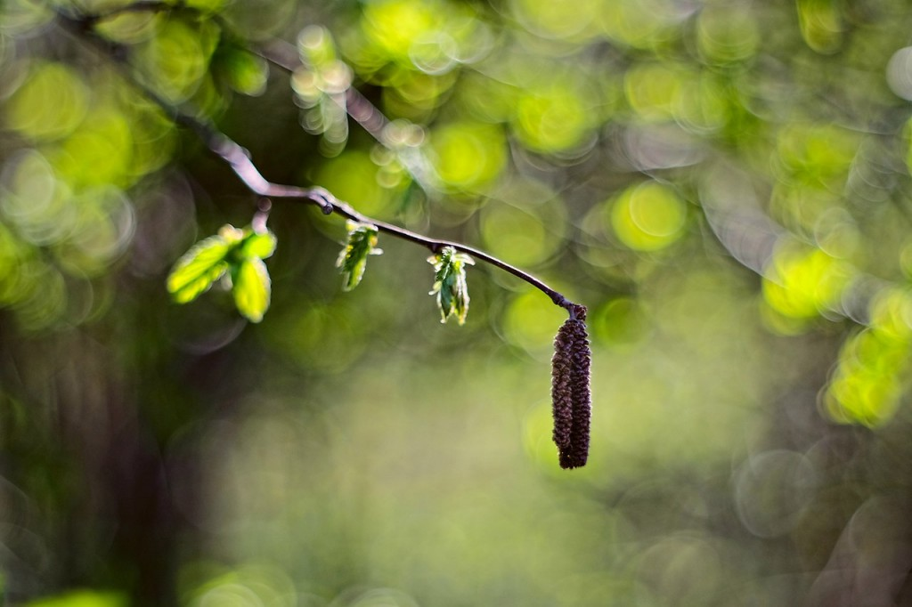 Весна во Владимирских парках 04