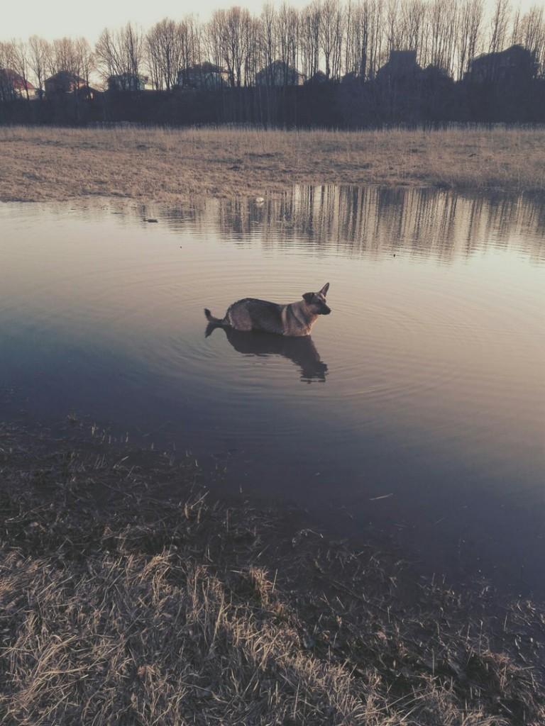 Владимиркая область, река вышла из русла 03