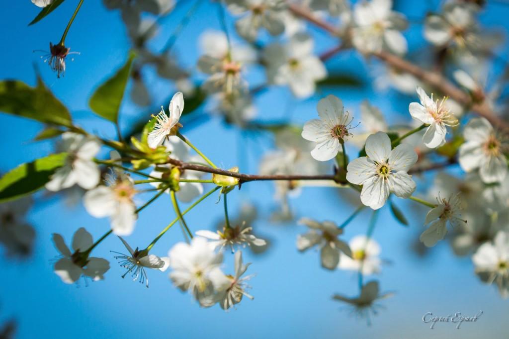 Владимирская область. Весна во всей красе 02