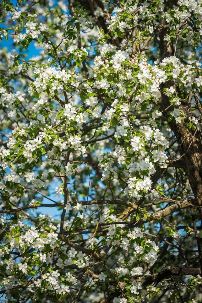 Владимирская область. Весна во всей красе 04