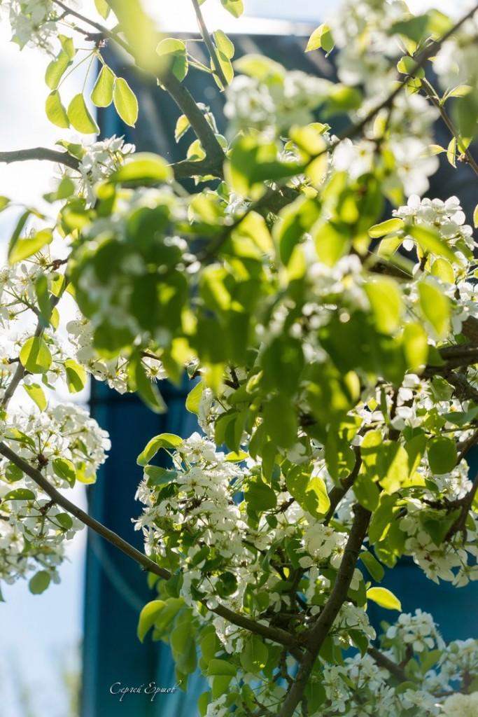 Владимирская область. Весна во всей красе 05