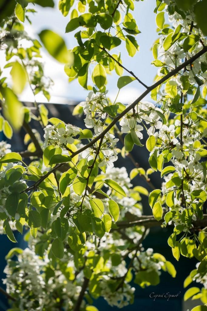 Владимирская область. Весна во всей красе 06