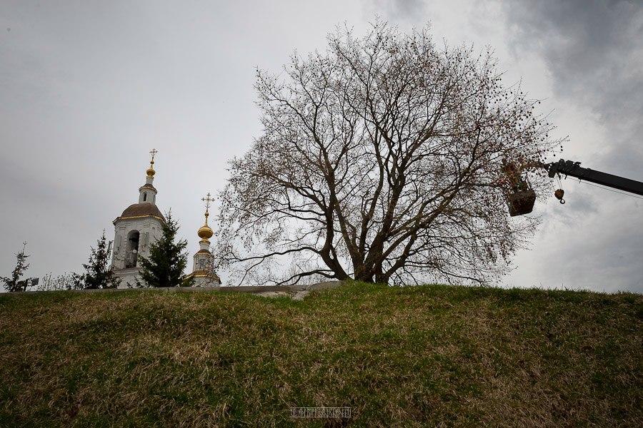 Вознесенка, пасхальное дерево (г. Владимир) 01