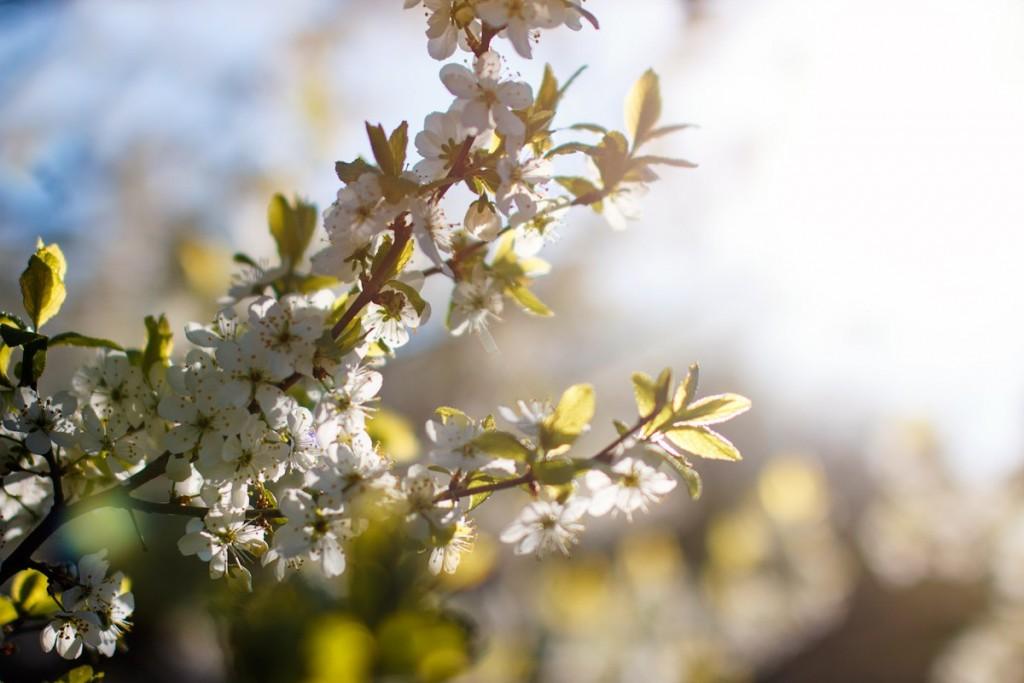 В парке у ДТЮ поют соловьи и вовсю цветут плодовые деревья