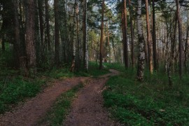 Красная Горбатка, лесная прогулка