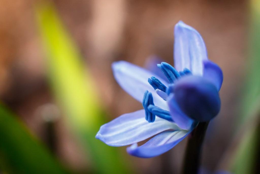 Первые весенние цветы 07