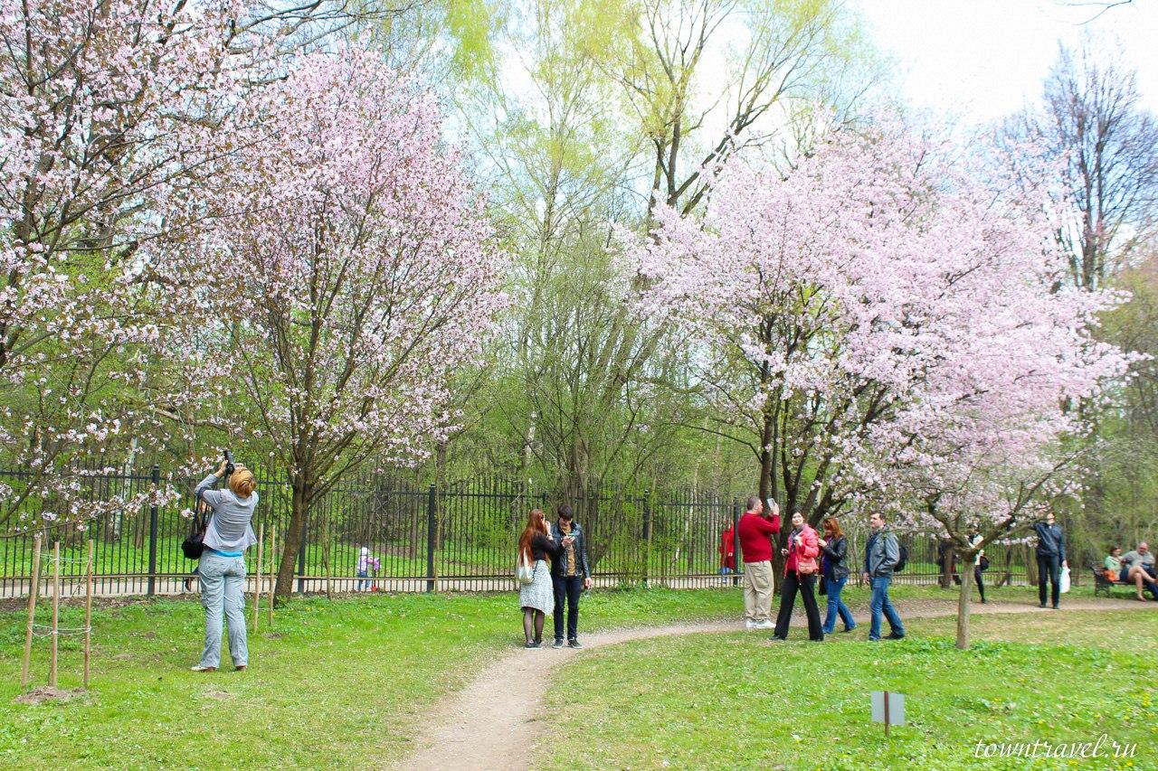 Японский сад москва 20 фотография