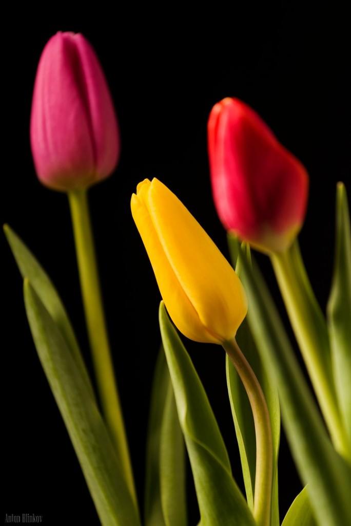 Пора весенних цветов