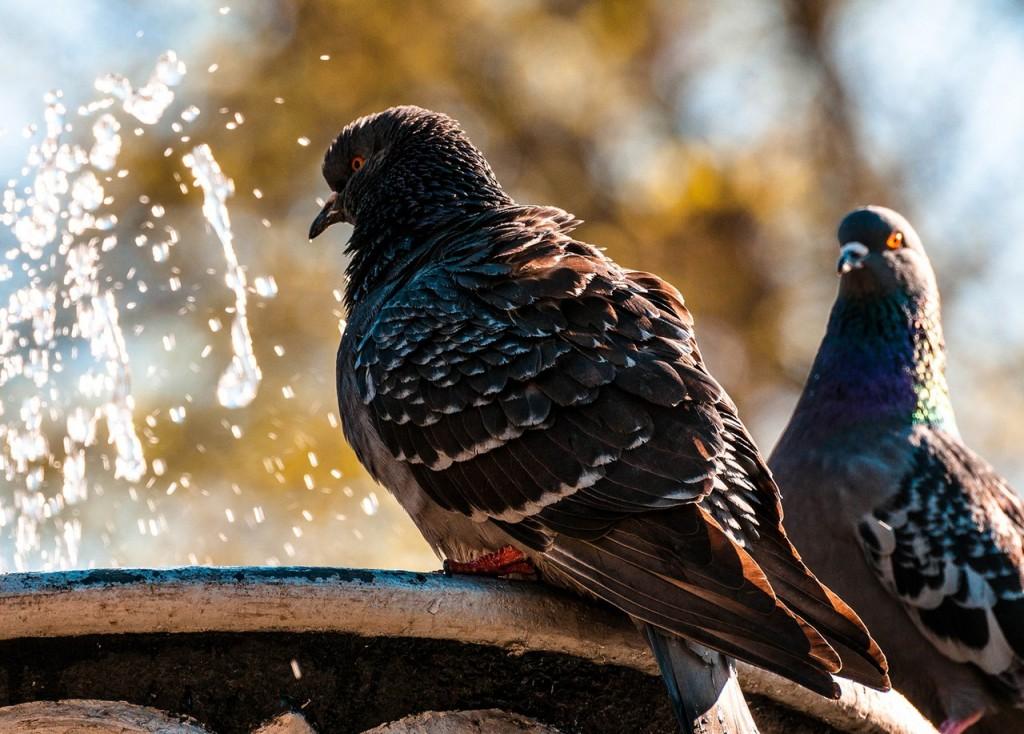 Прекрасные голубки 03
