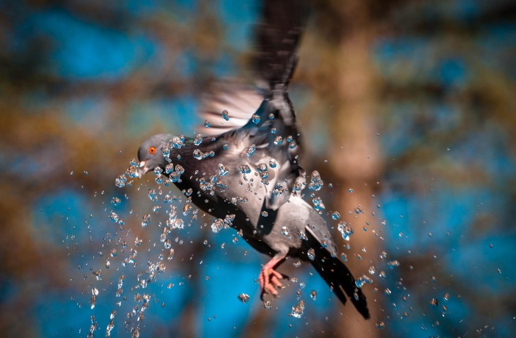 Прекрасные голубки 04