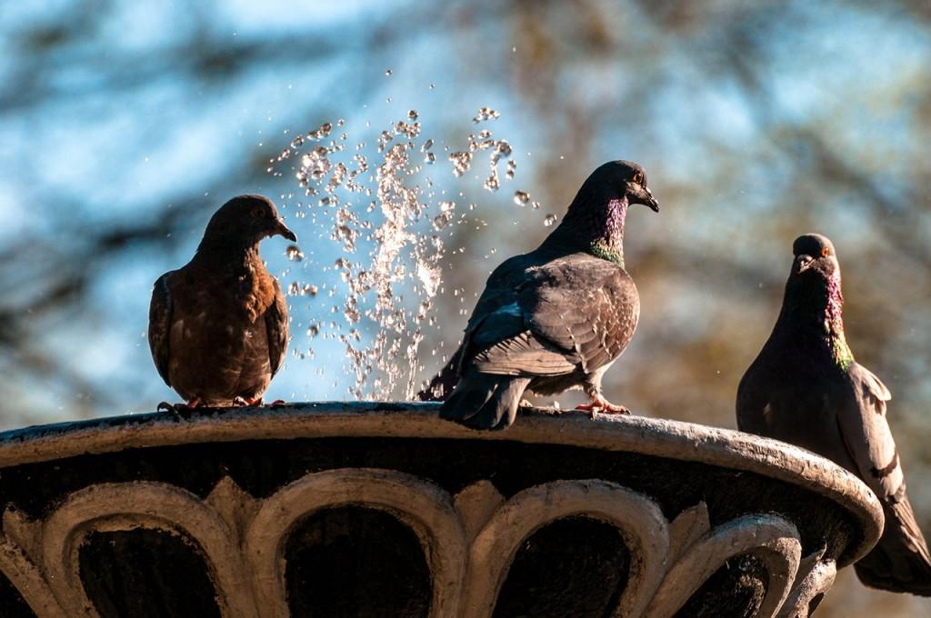 Прекрасные голубки 10