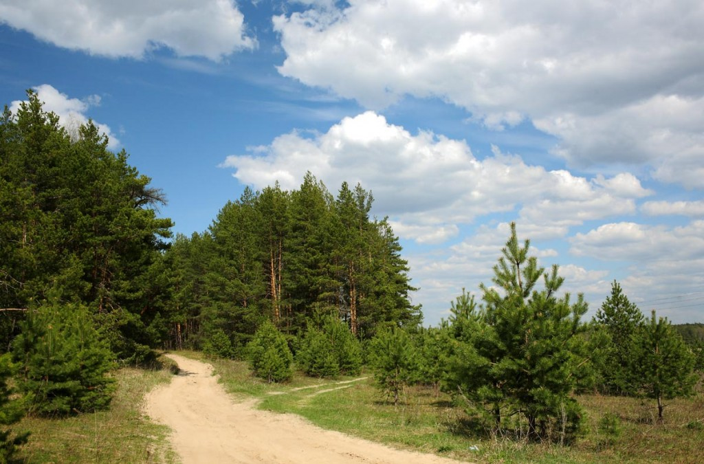 Прогулка по весеннему лесу (Близ Коврова) 01